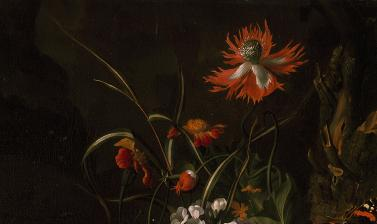 A 'Forest Floor' Still Life of Flowers by Rachel Ruysch