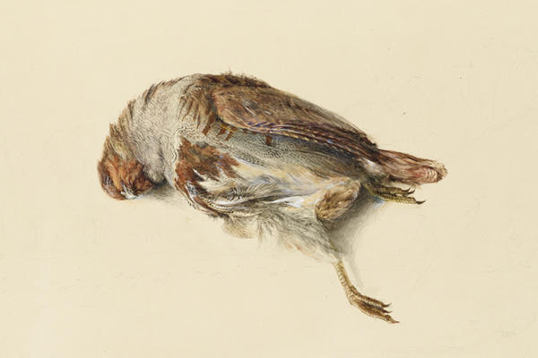 John Ruskin, Study of the Plumage of a Partridge