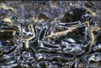 Detail x18 magnification (microscopy)